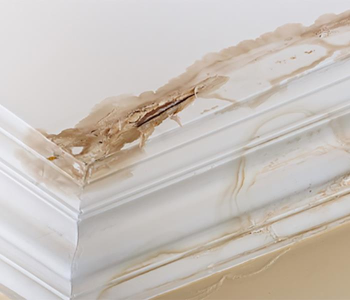 Water Damage Steps to Ensure a Home is Safe Again after Mold and Water Damage